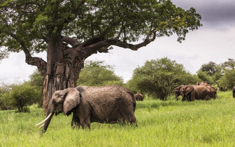 groep olifanten in tarangire national park