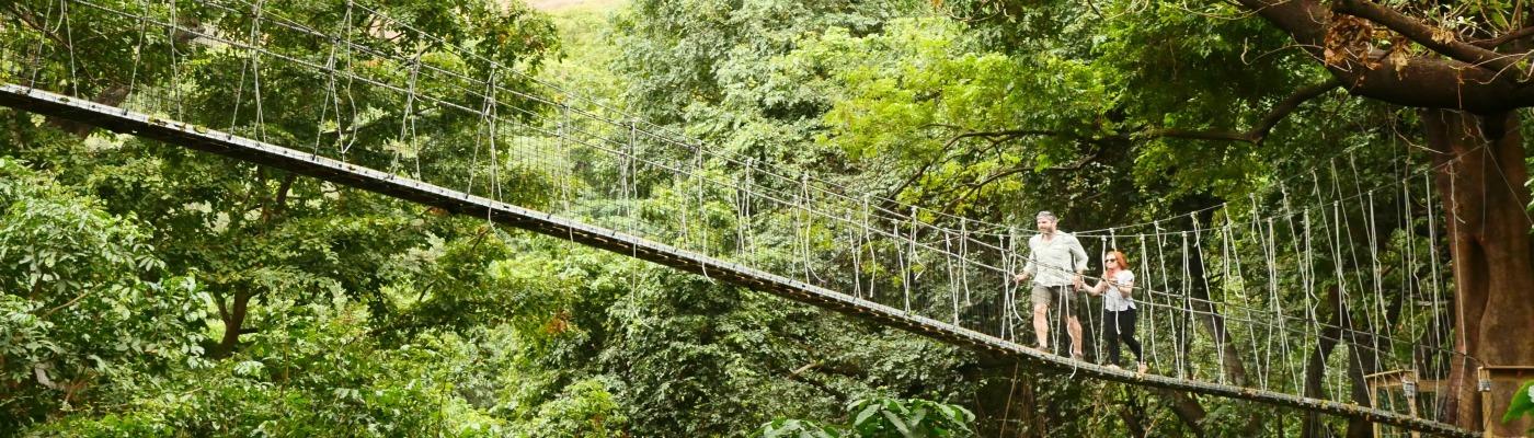 Treetop walkway Manyara