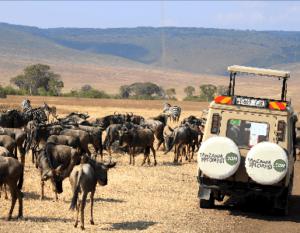 Afrika safari Ngorongoro