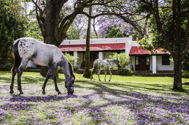 Garden Ngare Sero