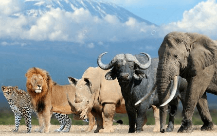 Tanzania big five