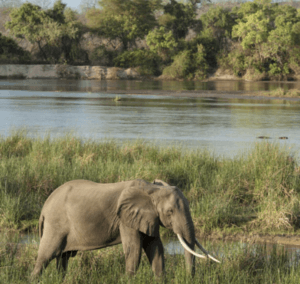 Rufiji River Selous Game Reserve