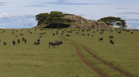 Tanzania reisafstanden