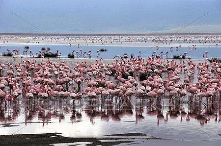 Lake Eyasi1
